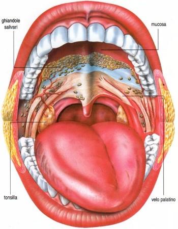 feci dalla bocca tumore