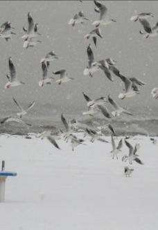 spiaggia-rimini-neve-giorni-della-merla