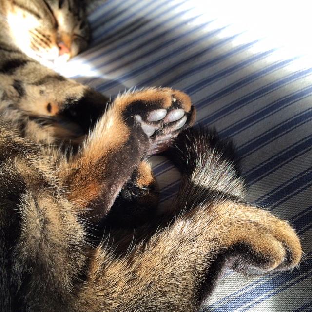 rinite-allergica-gatto