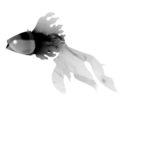 """""""FISH WISH"""" tridimensional illustration, X ray"""