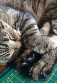 anche i gatti hanno i loro problemi di lunedì