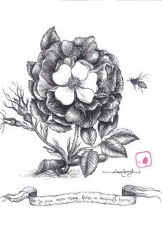 alchimia-elena-borghi-illustrati-logos-edizioni